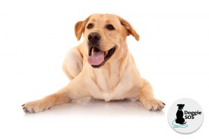 Incredible dog training