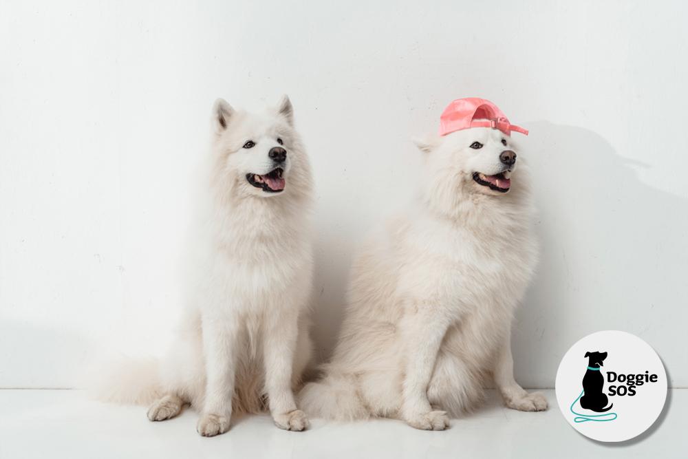 Dog Behaviourist and training