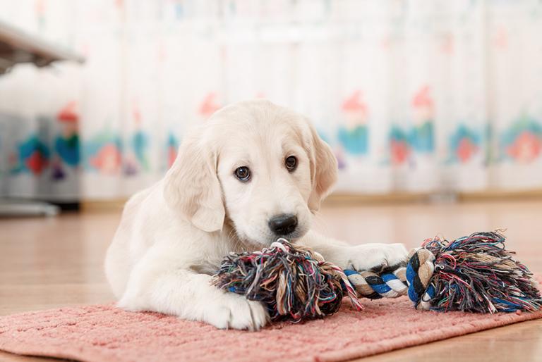 Profesional Dog Training