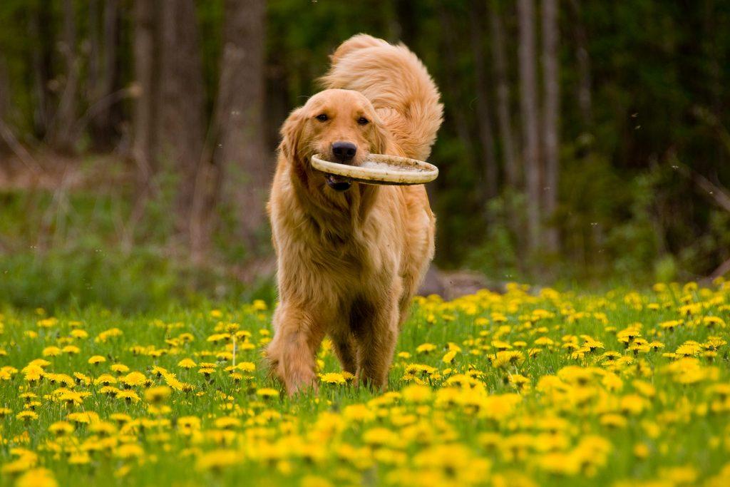 Puppy or dog training