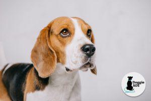 Surrey and Hampshire dog trainer