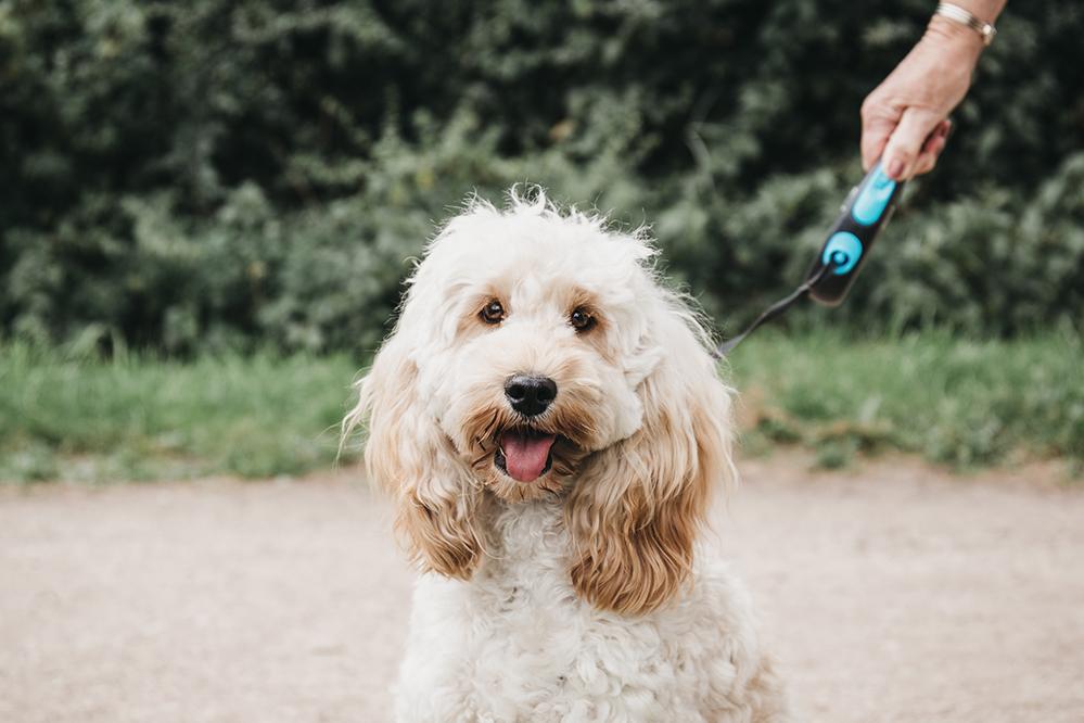 Dog training in Surrey